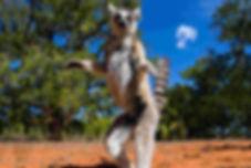 madagascar_lemur_highlight.jpg