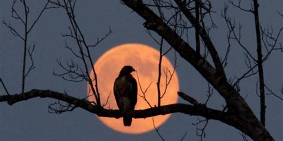 Harvest Full Moon Equinox Meditation
