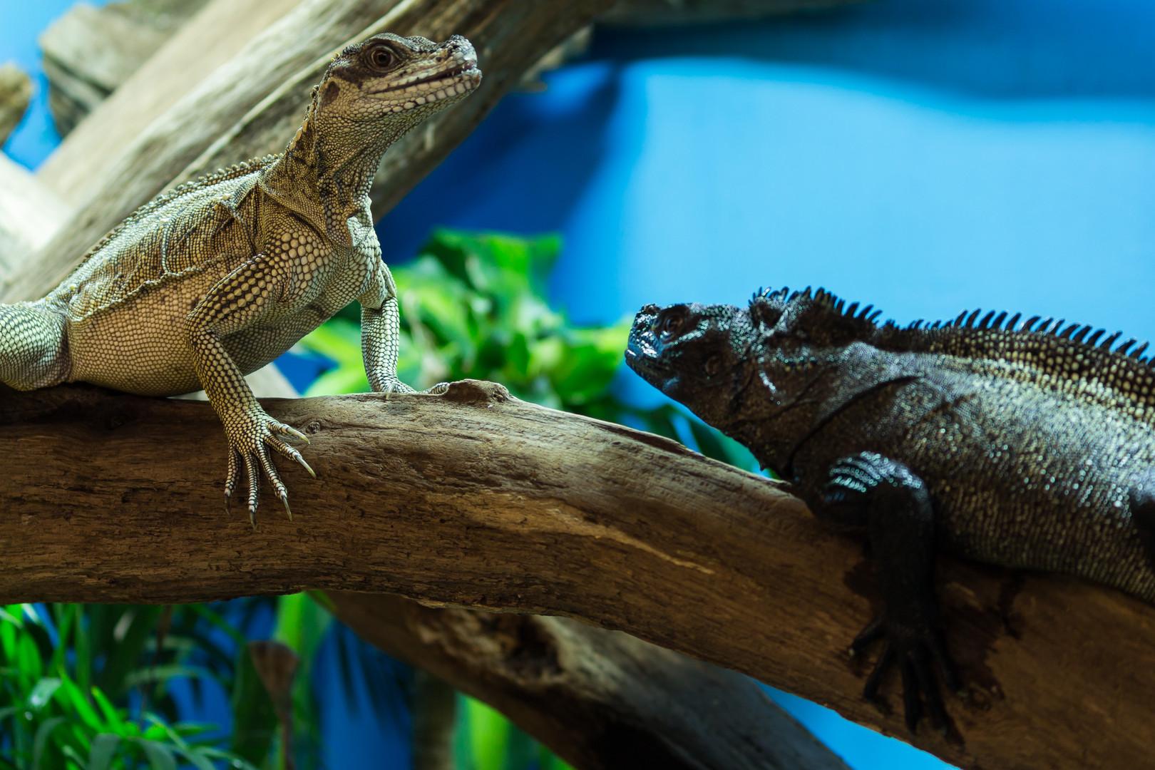 AMC_Reptile-5.JPG