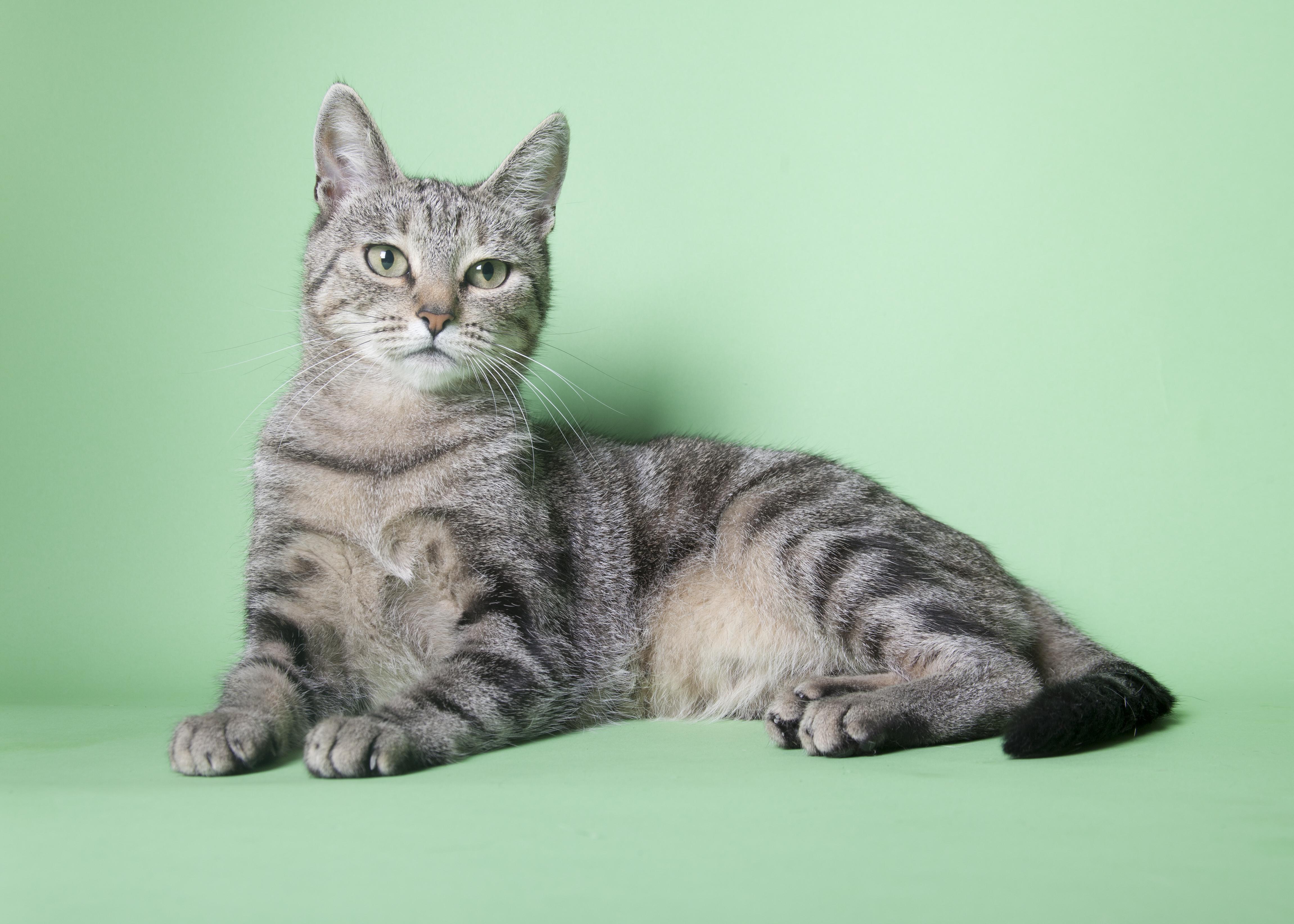 Gatto soccorso veterinario catania