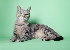 healthy pet kitty cat