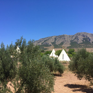 View from our olive field