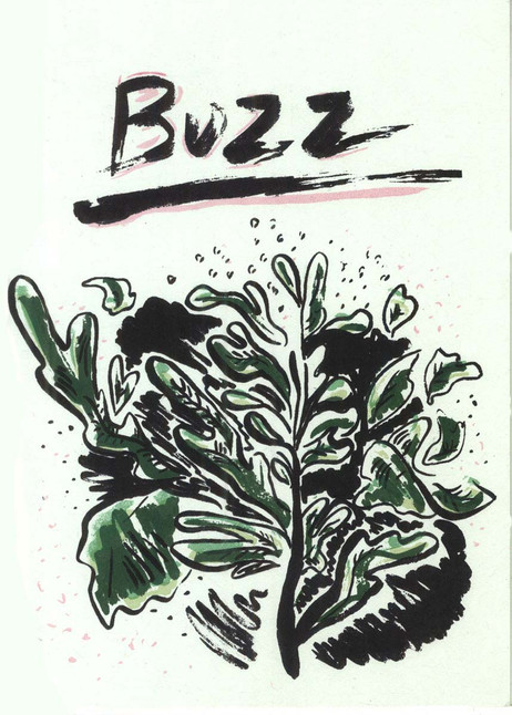 Buzz (chapbook cover)