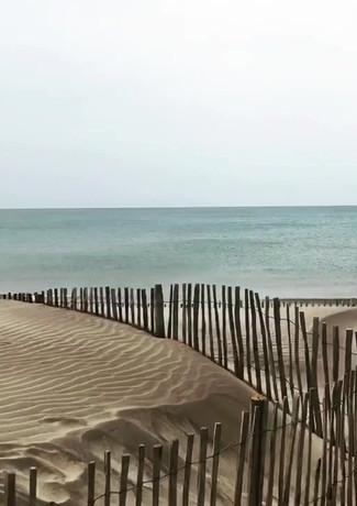 Paparazzi am Strand in der Camargue