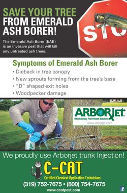 CCat Emerald Ash Borer Poster