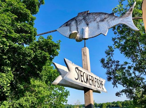Steckerlfisch-Genuss am Pichlingersee