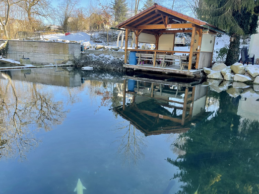 Fangfrische Fische aus der  Goldberg Quelle in Schiedlberg