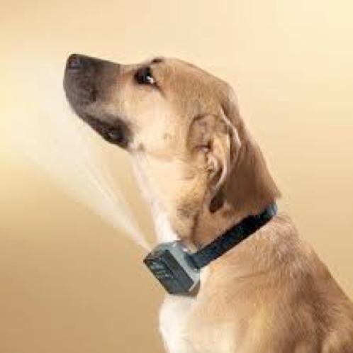 Citronella Spray Collar (rent $2/day)