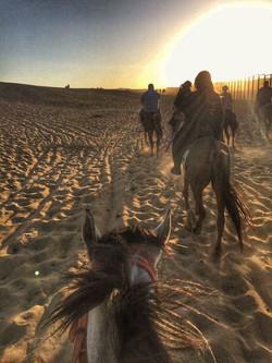 Riding Horse in Giza Desert