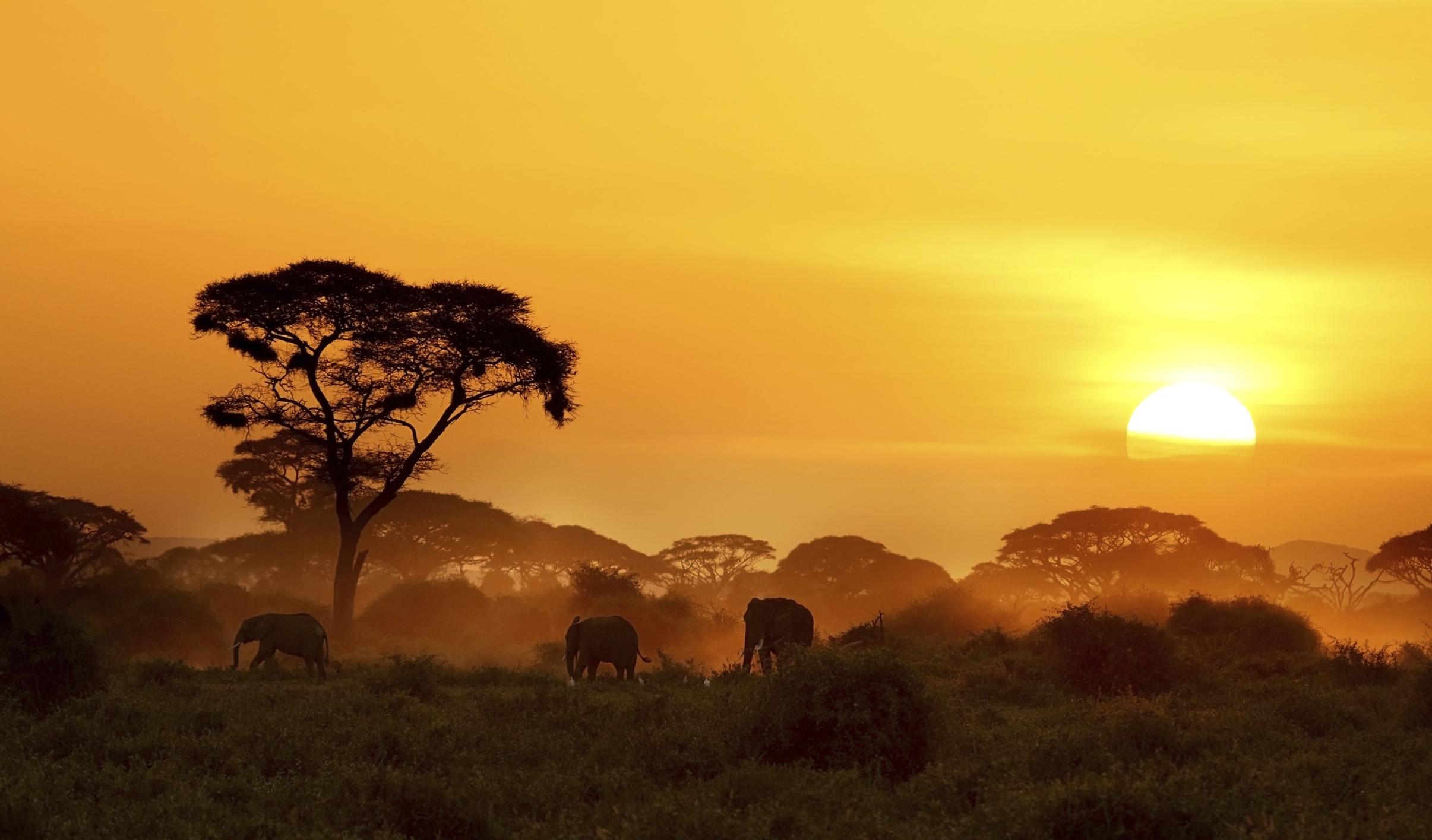 afrika vizesi