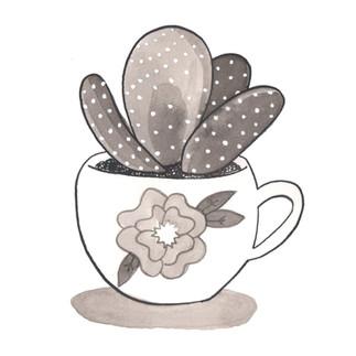 Cactus in a Tea Cup 2016