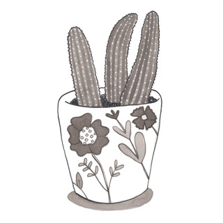 Cacti in a Cup, 2016