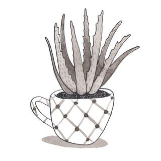 Aloe in a Tea Cup 2016