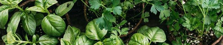 Herbs%20by%20Melanie%20DeFazio%20%20-%20