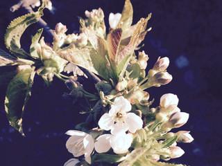 Ayurveda for våren