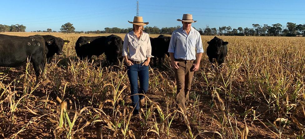 Kate and Nick Boshammer of NBGenetics near Chinchilla, QLD