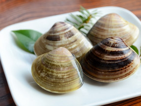 茨城県の潮干狩り♪【今季からルール変更】ハマグリを食べよう!