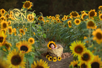 Annalise Newborn Sunflower Field smaller file.jpg