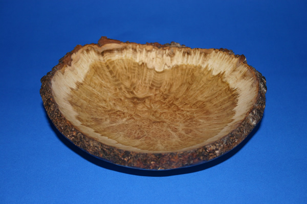 Acacia Burr