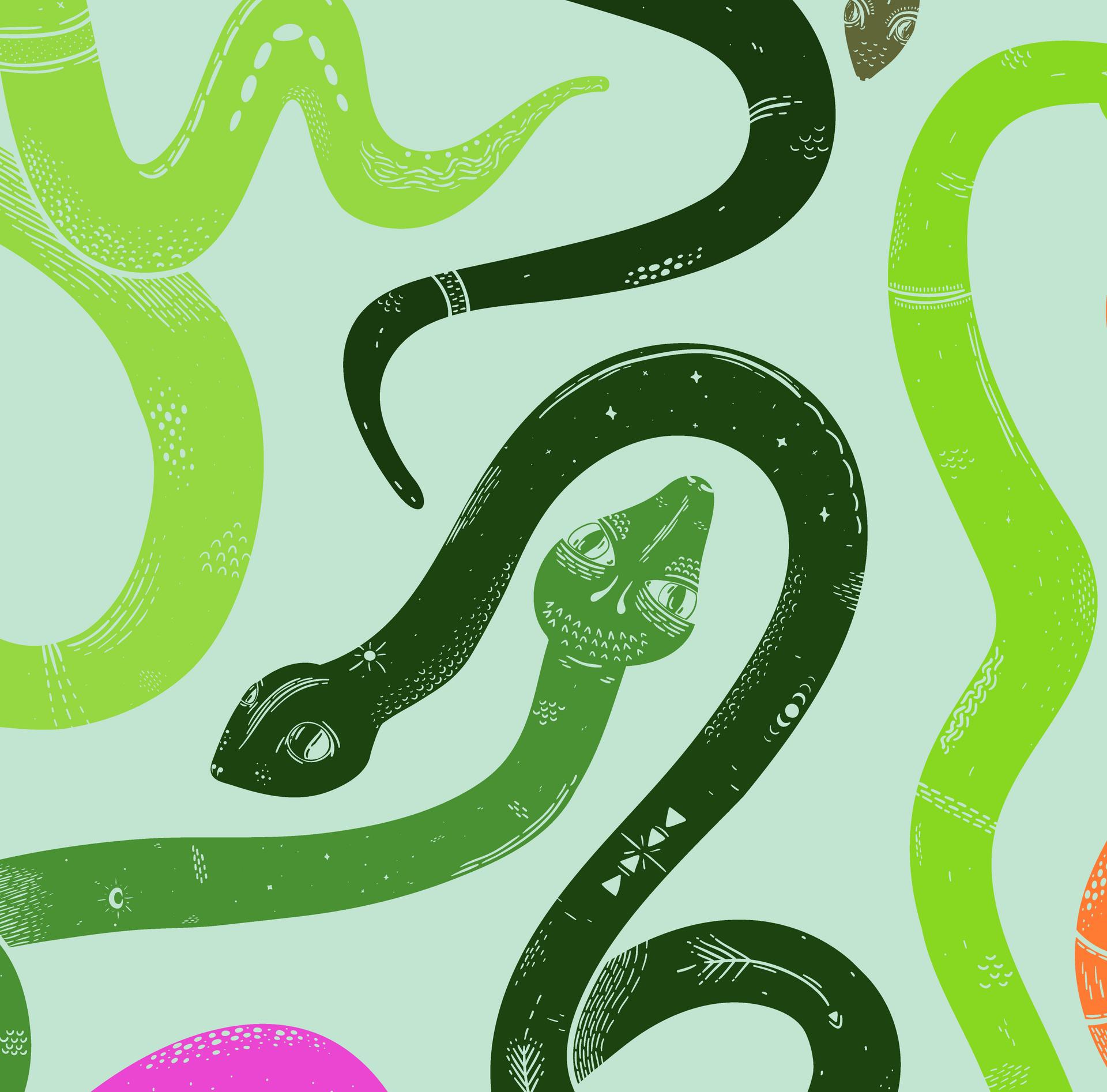 Snake Close Up 1