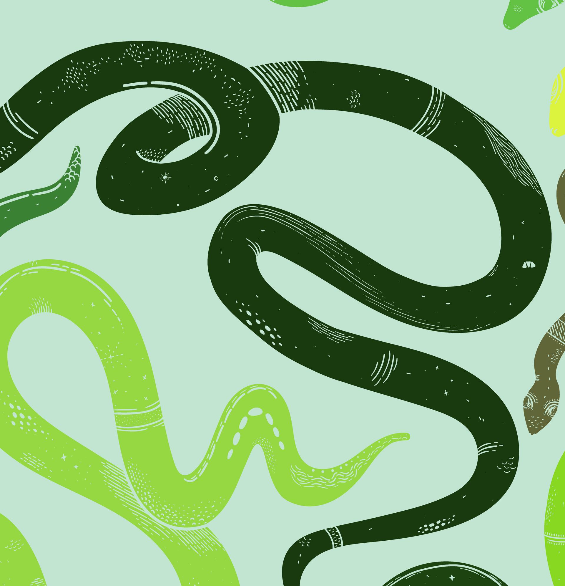 Snake Close Up 3