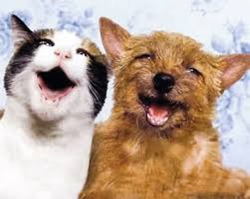 dog n cat good dental pic.jpg