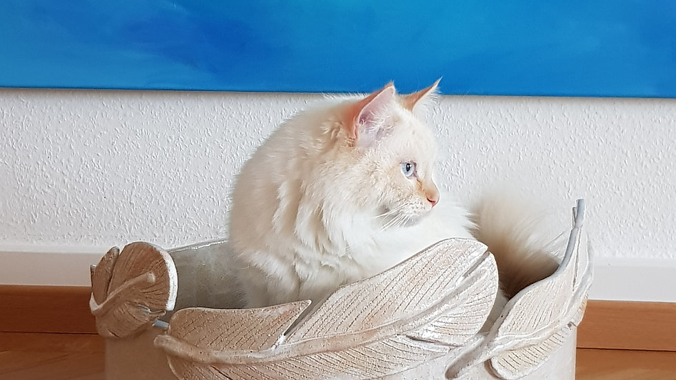 Modell Milo mit Federn in weiss /naturfarben