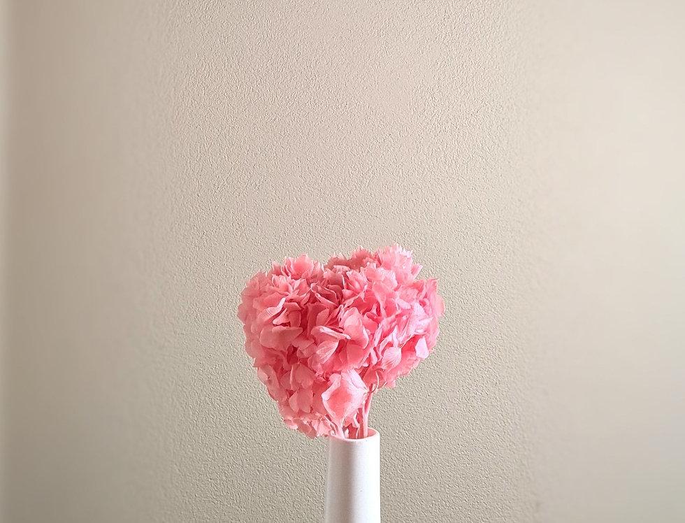 longlife Hortensie, pink