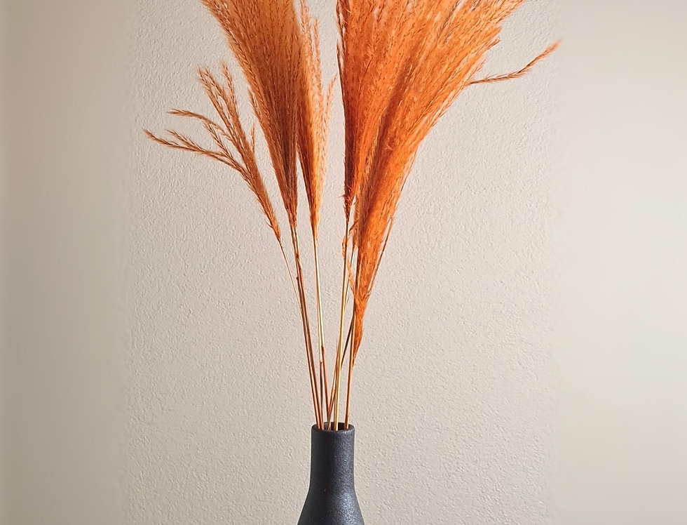 Miscanthus Schilfgras, orange