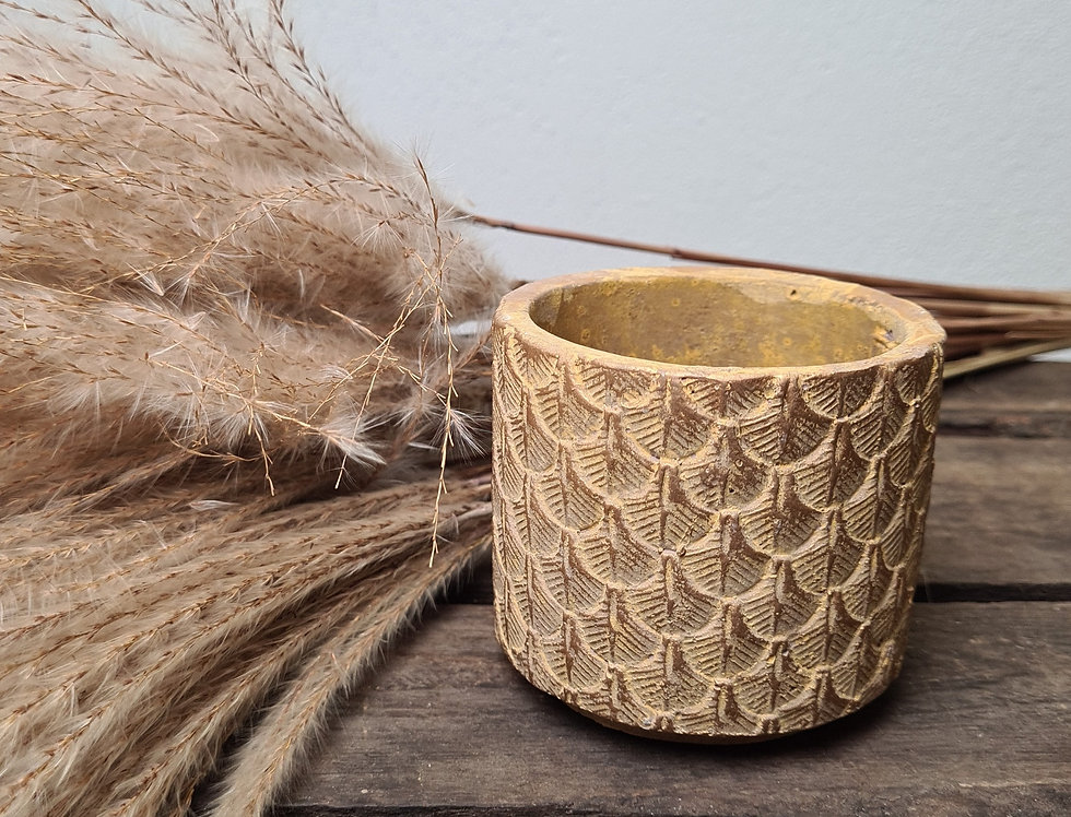 Topf Palm gold