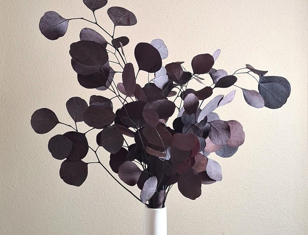 Eucalyptus, aubergine