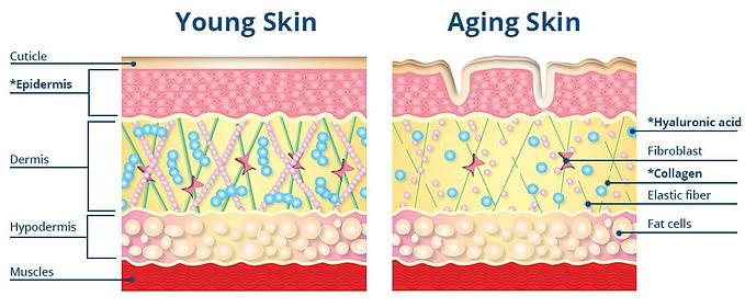 DMAE Skin Layers