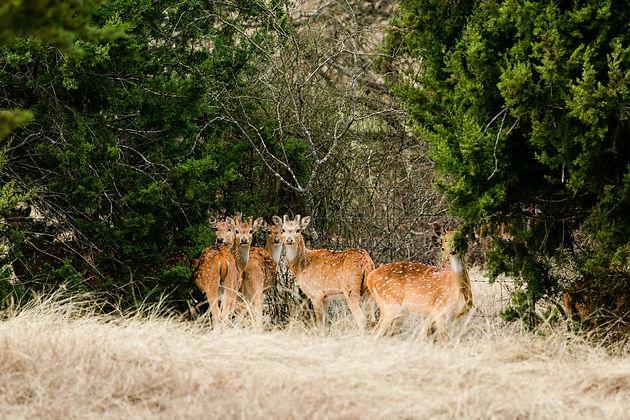 Blue Hills Ranch-108.jpg