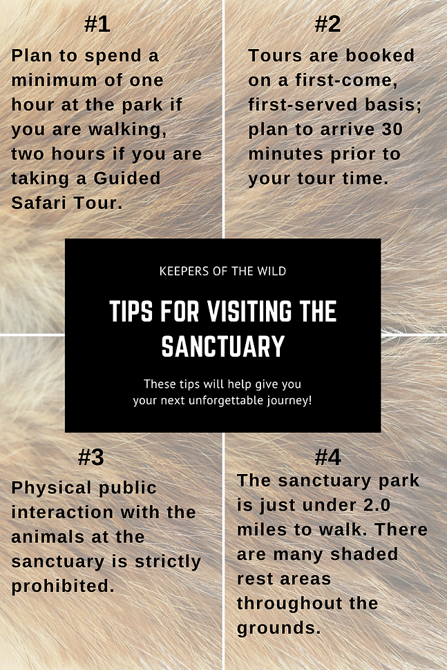 Tips #1.png