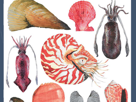 Field guide mollusks of Panay, Philippines