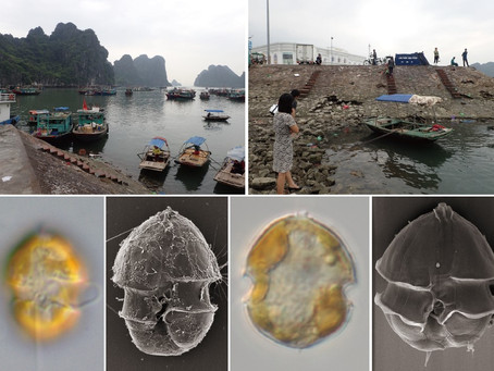 New paper on toxic dinoflagellates and their toxin from coastal waters of Japan and Vietnam