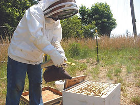 Randal Pride - Beekeeping at GT.jpg