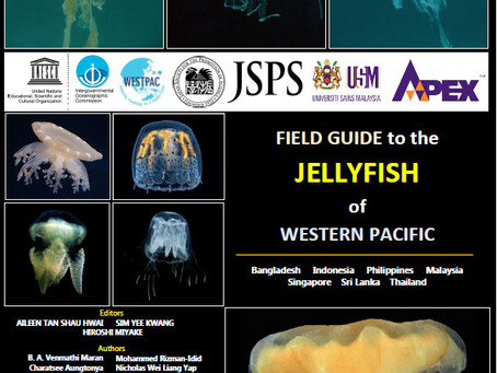 Field guide of jellyfish is coming soon