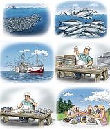 Fisk Storybord.jpg