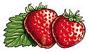 2 strawberries.jpg