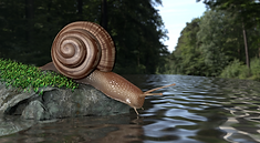 Snail for homepage.png