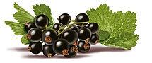 Blackberries cluster.jpg
