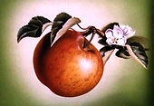 Apple with flower.jpg