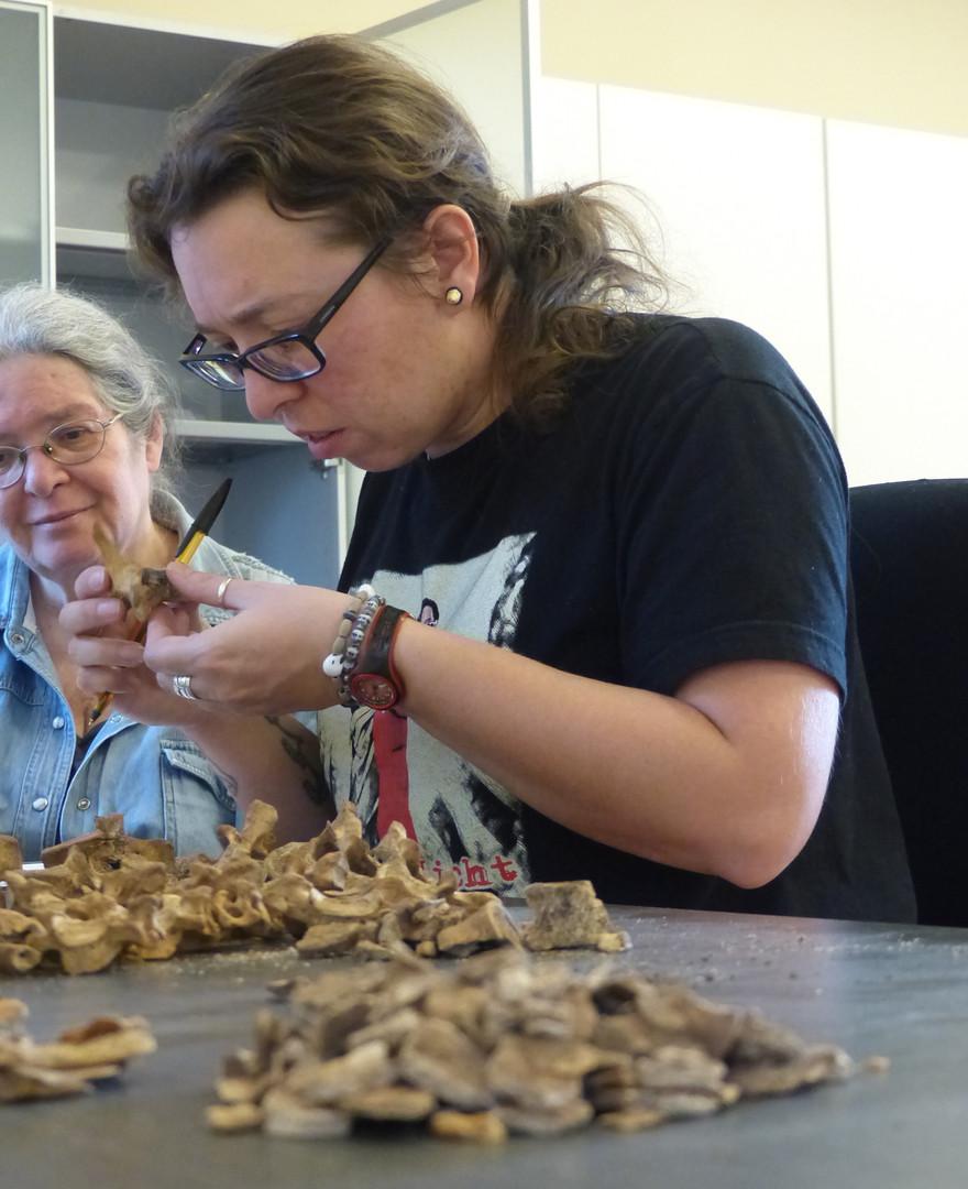 Katie at the Lalibela Cultural Centre examining skeletal material excavated at Gännätä Maryam
