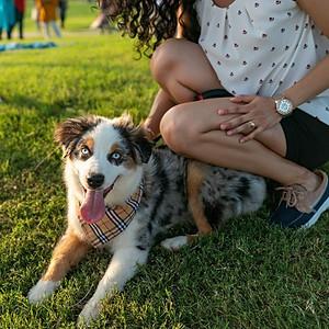 Pet Photo shoots