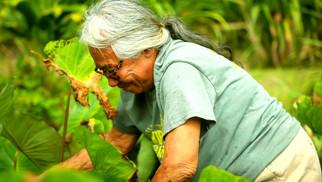HEALING HANDS. HEALING PEOPLE | Hawaii