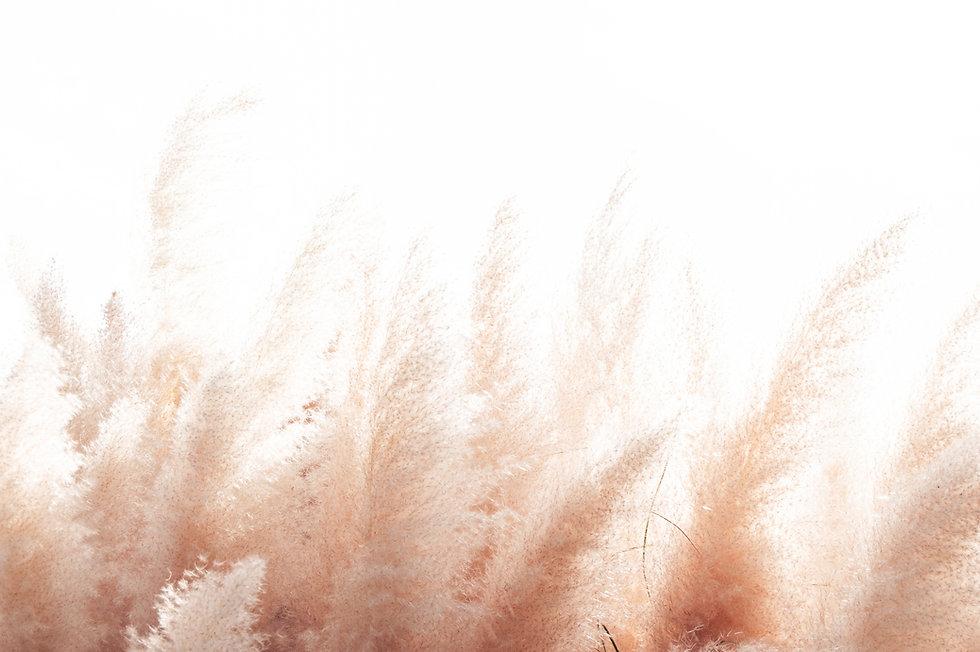 pompas-peach-light-background.jpg