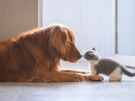 Dog meets kitten, and they teach us about power