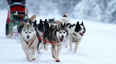 dog sledding, conferences, events, event planning, teambuiling, leadership, polarleader, training, great programs, organizational learning