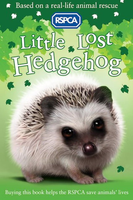 A Little Lost Hedgehog